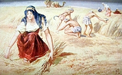 Ruth gleaning in the field of Boaz